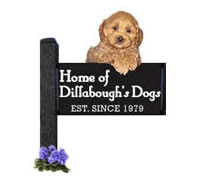 Home of Dillabough's Dogs, Est Since 1979