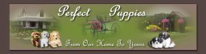 Perfect Puppies - From Our Home to Yours