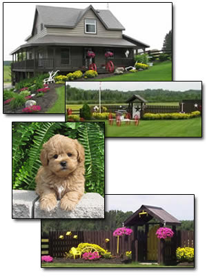 Collage of Poodle Puppies and Property